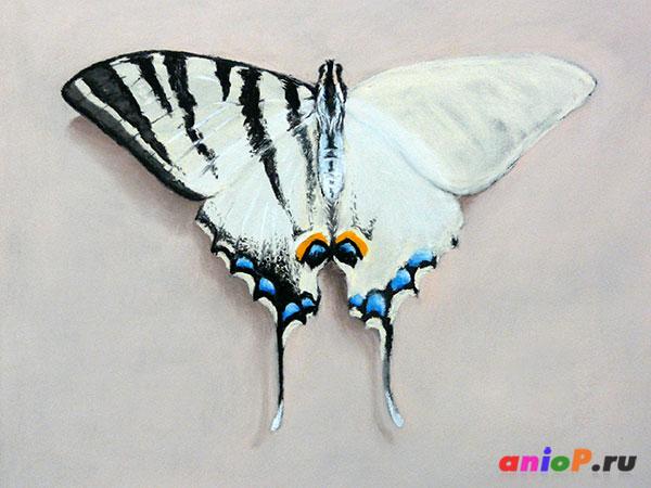 рисуем бабочку пастелью