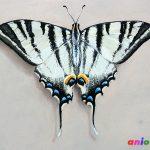 Рисунки бабочек сухой пастелью