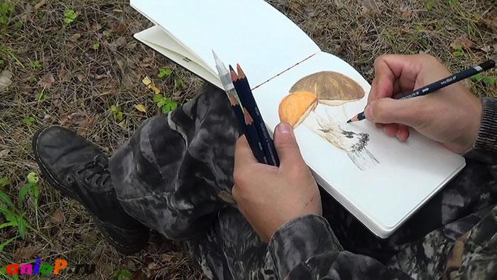 Поход за грибами. Часть 2 — рисуем грибы с натуры акварельными карандашами