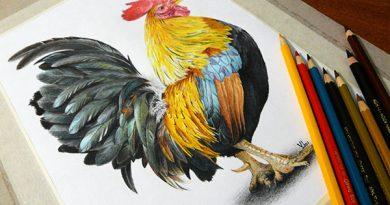 Рисунок петуха цветными карандашами