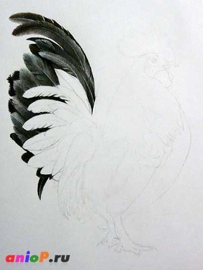 процесс рисования петуха