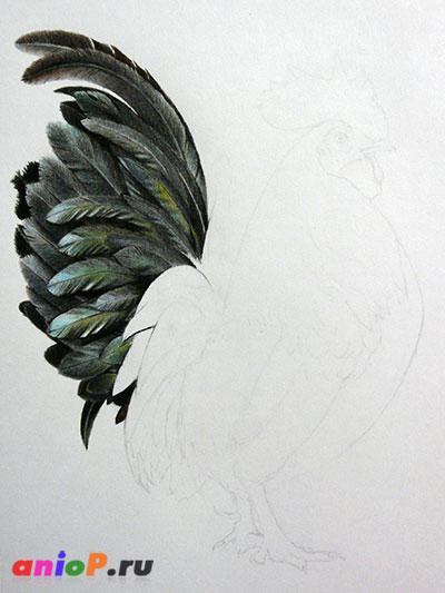 процесс рисования перьев петуха