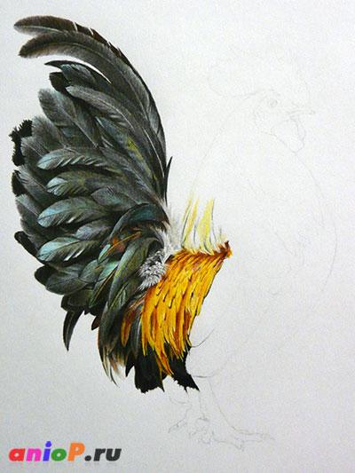 рисунок хвоста петуха