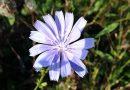 Путешествие в ботаническую иллюстрацию