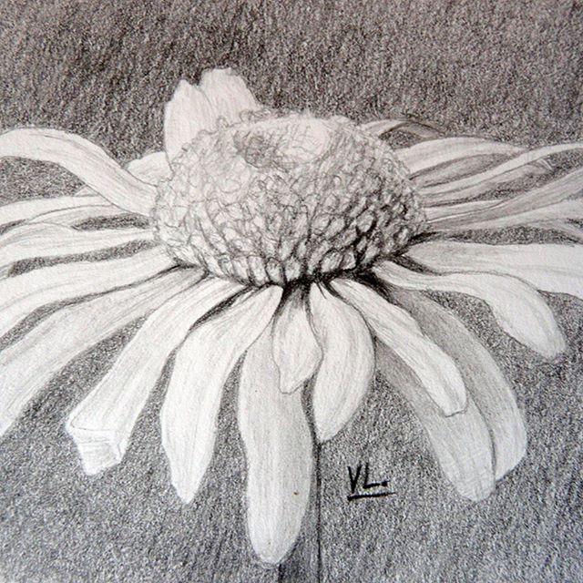 Ромашка простым карандашом. #из_старых_рисунков #карандаш #рисунки #ромашка #скетч #цветок #scetch #простойкарандаш