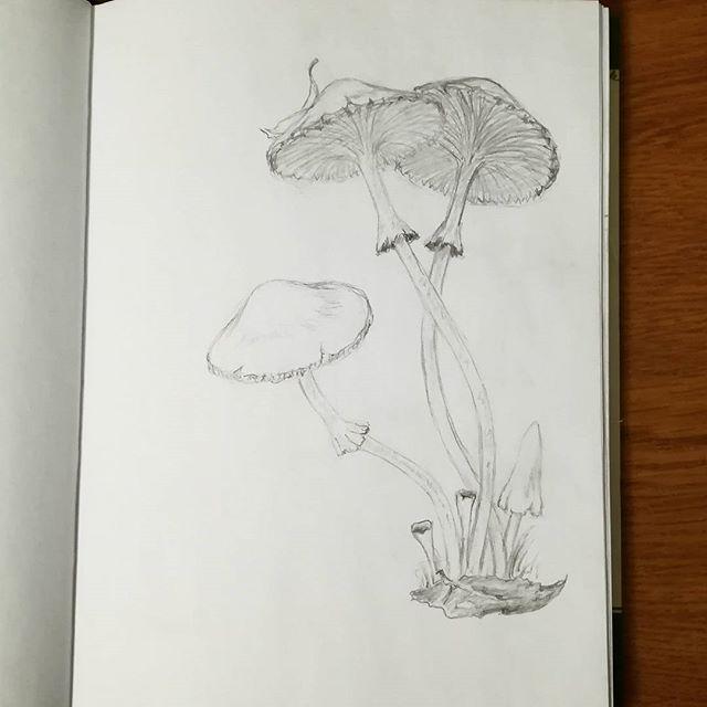 Стройные грибочки. Простой карандаш.#рисунки#скетч#карандаш#простойкарандаш#наброски#грибы#грибочки#sketch#drawing