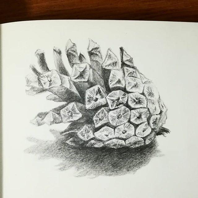 Шишка сосновая. #рисунки #скетч #карандаш #рисование #шишка #sketch #drawing