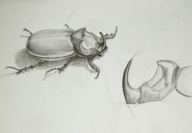 Жук-носорог. #рисунки #скетч #карандаш #рисование #жук #жук-носорог #sketch #drawing #из_старых_рисунков