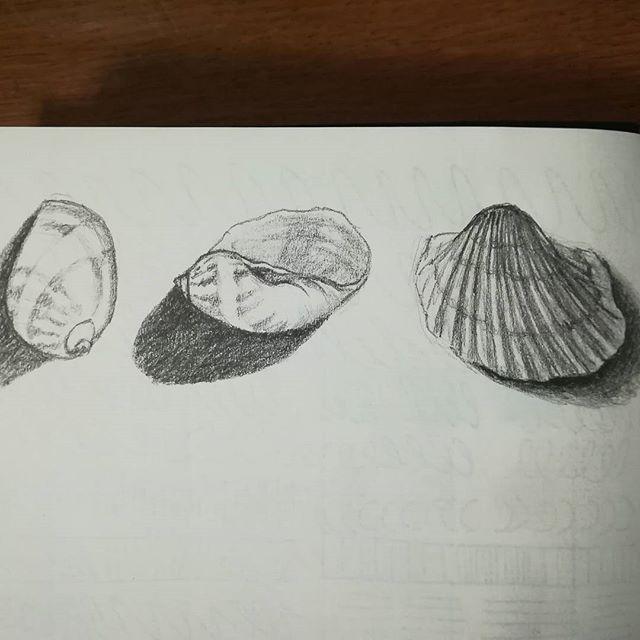 Ракушки. #рисунки #скетч #карандаш #рисование #ракушки #из_старых_рисунков #sketch #drawing