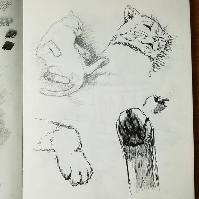 Наброски кота. #из_старых_рисунков #рисунки #скетч #карандаш #линер #рисование #наброски #кот #котэ #кошка #sketch #drawing