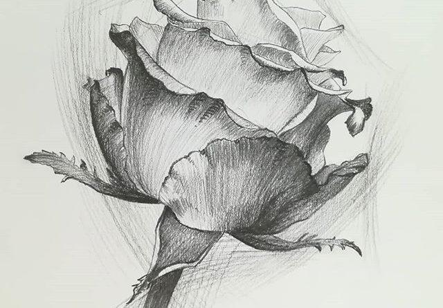 8 марта в скетчбуке. Всю вторую половину человечества с праздником! #рисунки #скетч #карандаш #рисование #роза #drawing #sketch #8march #8марта