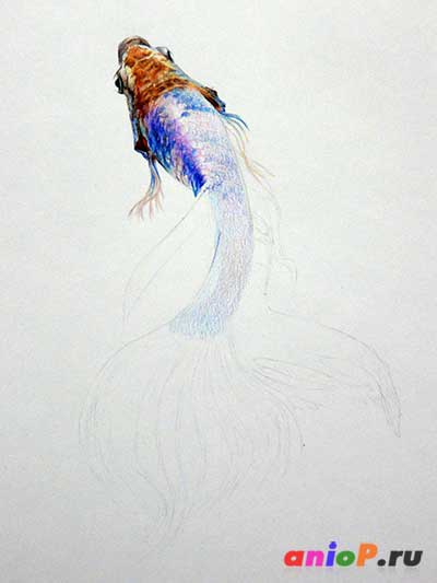 Рыбка петушок цветными карандашами