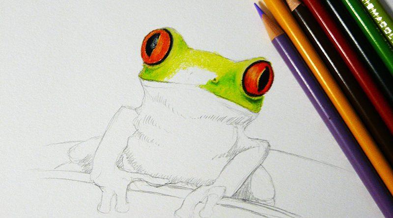 Рисунок лягушки цветными карандашами