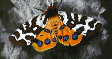 Как нарисовать бабочку пастелью