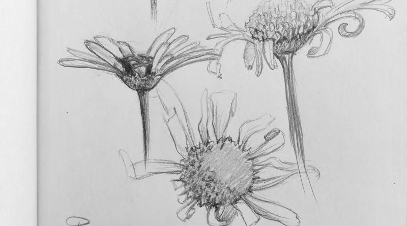 Как рисовать ромашку с натуры в скетчбуке