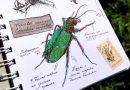 Рисунки жука скакуна в скетчбуке (наброски, скетчи)