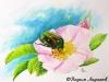 Бронзовка на цветке шиповника