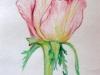 Нежная роза, набросок, цветной карандаш