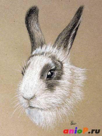 Эскиз головы кролика