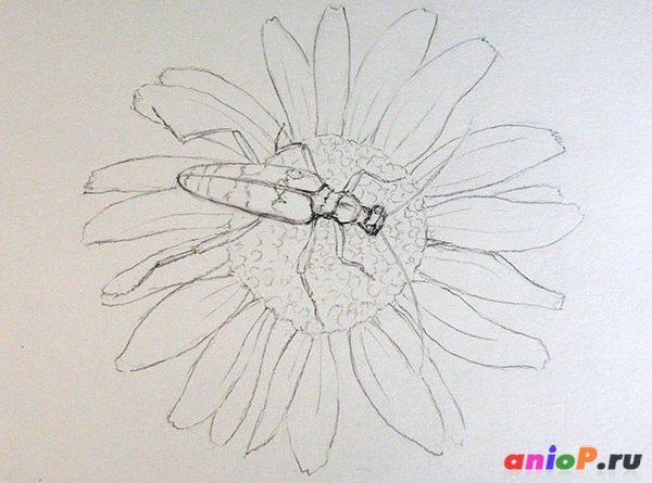 Линейный рисунок жука простым карандашом