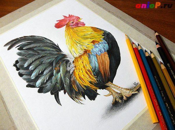 рисунок петуха карандашами