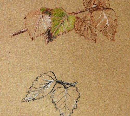 итальянский рисунок - листья березы карандашом