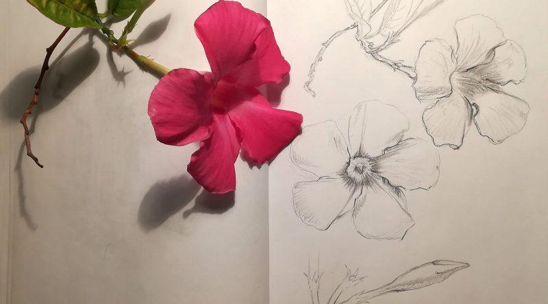 Цветок из Доминиканы