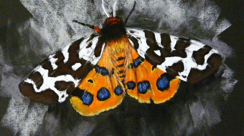 как нарисовать бабочку сухой пастелью