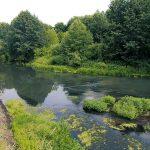 Природа инзенского края. Экскурсия в лес и на реку Инза.